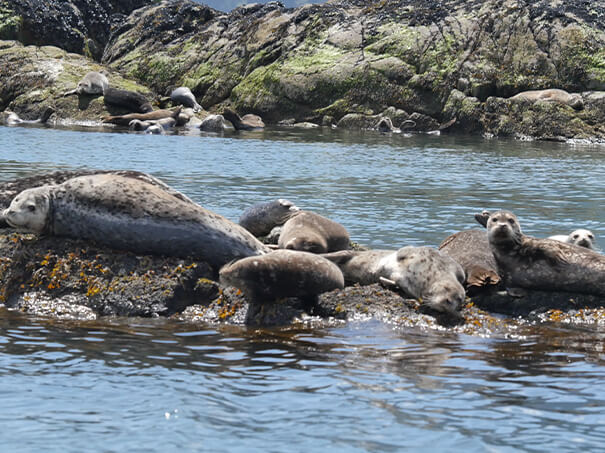Ocean Wildlife Tour Squamish